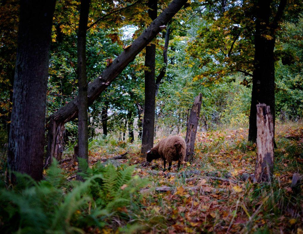 Lammasmetsässä Kuusiluodolla syksyllä 2017.
