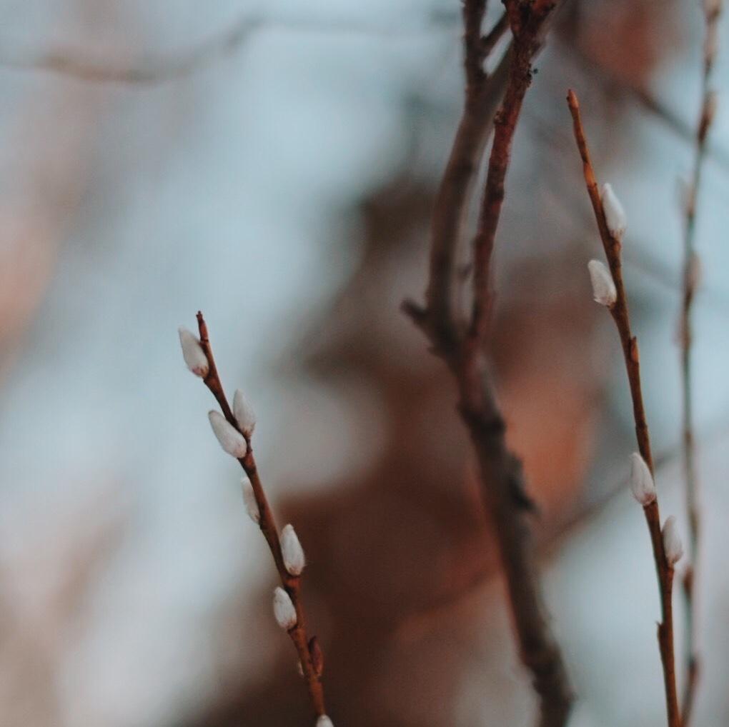 fallkullan joulu 2018 Joulu ja uusivuosi Helsingissä 2017 | Pienten Helsinki fallkullan joulu 2018