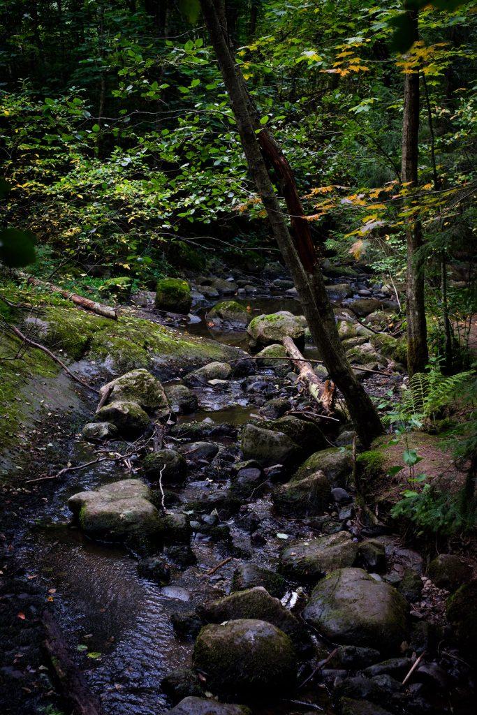 Sipoonkorven kansallispuiston Ponun perinnepostia -polulla on vaihtelevaa luontoa ja paljon nähtävää.